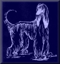 Northern California Afghan Hound Club