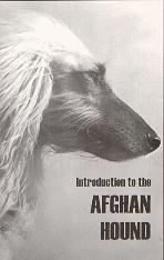 Introduction to the Afghan Hound